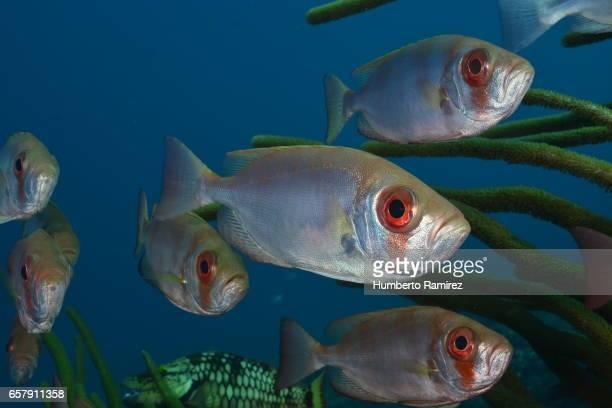 caribbean sea reef fish