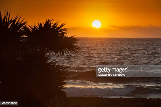 caribbean sea waves crashing onto the iron shore of tropical coastline in mexico at sunrise. - istock photo stock pictures, royalty-free photos & images