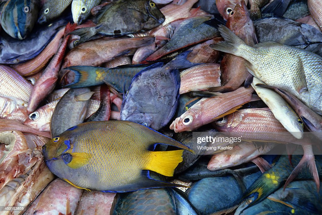 Caribbean, St. Lucia, Tropical Fish For Sale On The Market... : News Photo