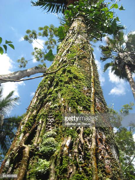 caribbean tree - stephan de prouw stock pictures, royalty-free photos & images