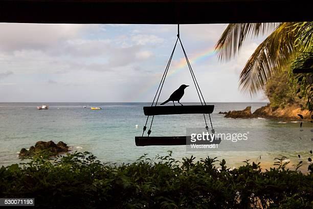 caribbean, trinidad and tobago, tobago, castara, bird silhouette in front of rainbow - paisajes de trinidad tobago fotografías e imágenes de stock