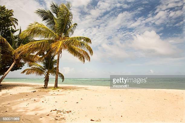 caribbean, trinidad and tobago, tobago, pigeon point - paisajes de trinidad tobago fotografías e imágenes de stock