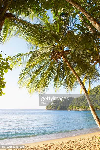 caribbean, west indies, tobago, englishman's bay, palm trees and beach - trinidad and tobago stock pictures, royalty-free photos & images