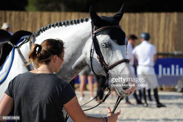 Caribis Z backstage during the Longines Grand Prix Athina Onassis Horse Show on June 3 2017 in St Tropez France