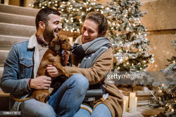 caring couple and their cute brown canine - dachshund holiday stock pictures, royalty-free photos & images