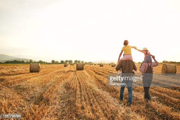 caring father and grandpa carrying curious sister on their shoulder while enjoying sunset at the wheat field - farm stock pictures, royalty-free photos & images