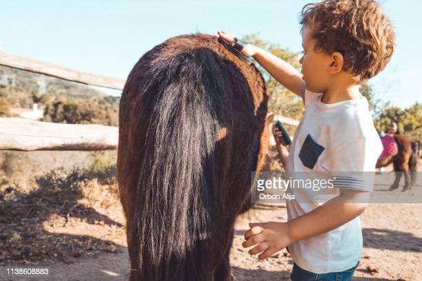 prendersi cura di un pony. - andare a cavallo foto e immagini stock