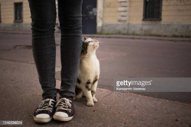 caring for homeless pets concept. - rescue stock pictures, royalty-free photos & images