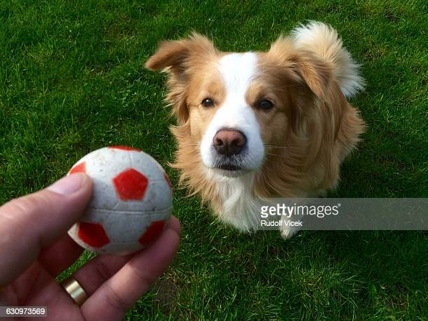 caring for your pets - pov - hairy balls stock photos and pictures