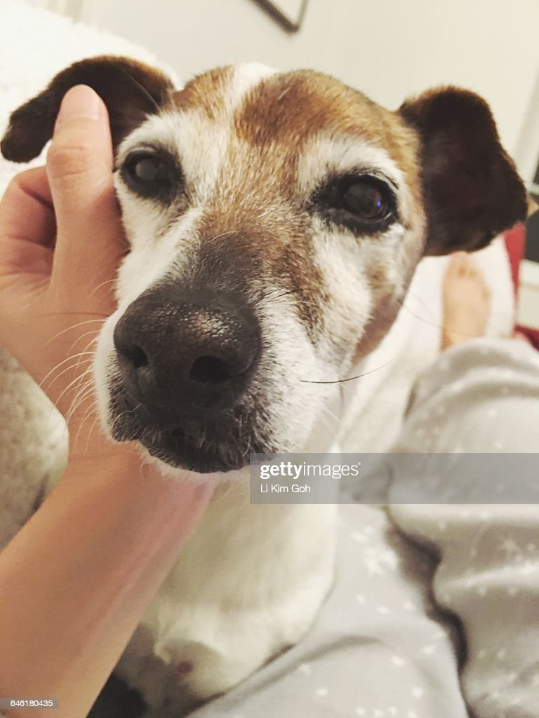 Caring for Your Pets - POV : Stock Photo