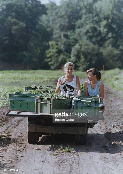Carla Bourque, of Belmont, Mass., and Kate Sheehan, of Lincoln, Mass., work in the fields at Wilson Farm in Lexington, Mass., on Sept. 16, 1990.