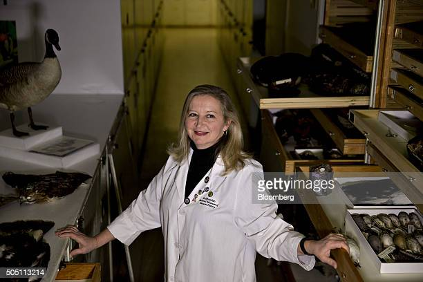 Carla Dove program manager of the Smithsonian Institution's feather identification lab stands for a photograph with bird specimens housed in the...