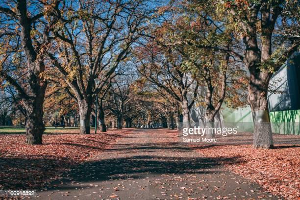 carlton gardens - carlton gardens stock pictures, royalty-free photos & images