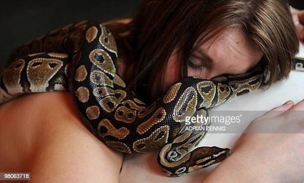 Carly an employee at Chessington World of Adventures poses for pictures as she enjoys a massage by two Royal Python snakes at a photocall to promote...