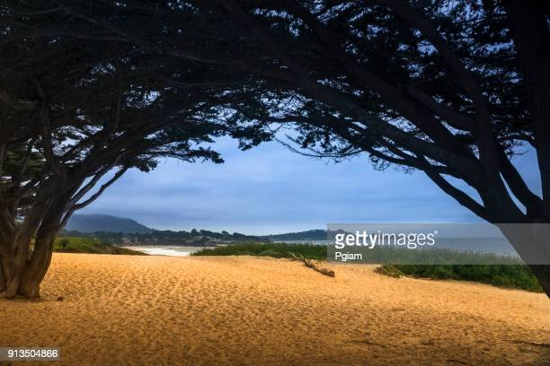 carmel beach in carmel-by-the-sea - monterey peninsula stock pictures, royalty-free photos & images