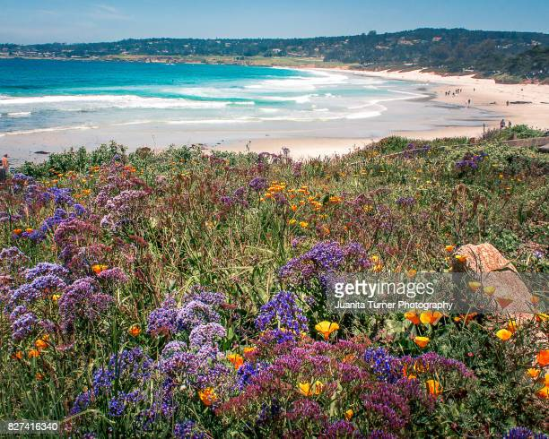 carmel beach - pacific ocean stock photos and pictures