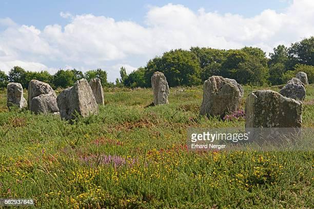 Carnac stones, menhirs near Carnac, Departement Morbihan, Brittany, France