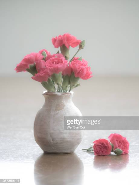 carnations 05 - carnation flower stock pictures, royalty-free photos & images