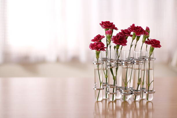 Carnations Flowers Wall Art