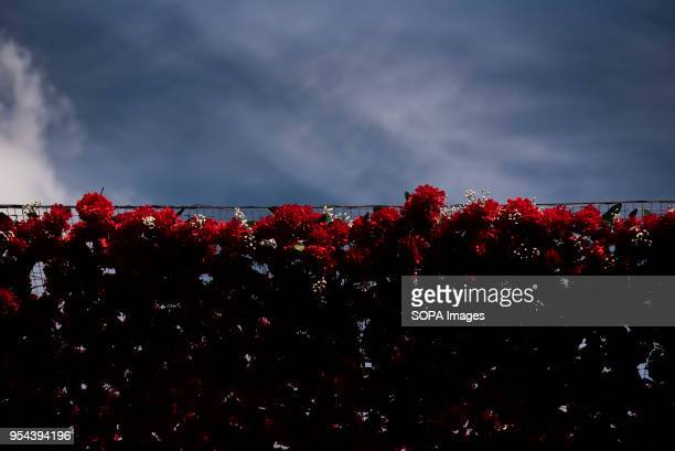 Carnations of the Cross in the square of Plaza del Carmen the day before the Dia de la Cruz or El día de la Cruz Día de las Cruces is one of the most...