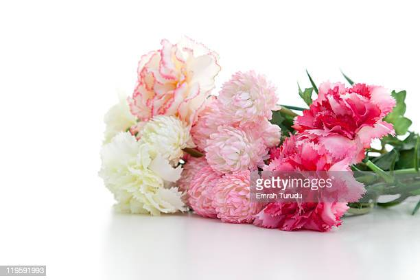 Carnations on the white background
