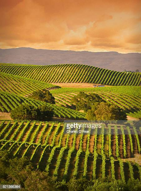 carneros vineyard - napa valley stock pictures, royalty-free photos & images