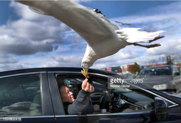Carol McGinn feeds one of her French fries from Sullivan's on Castle Island to a seagull from the passenger seat of a car in Boston on Feb 29 2020...