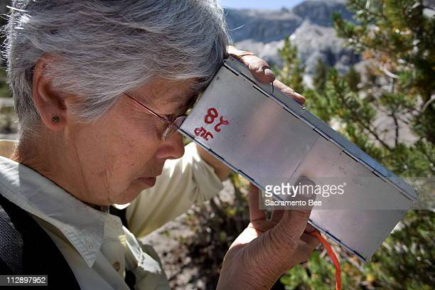 Carol Patton looks into a Sherman live trap to see what was caught on Tuesday August 12 at upper Young Lake in Yosemite National Park Retired UC...