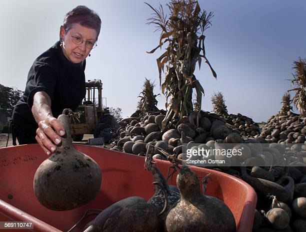 Carole Comfort 63 of Thousand Oaks picks through a pile of dried gourds which she uses in a class she teaches at Conejo Adult School Comfort teaches...