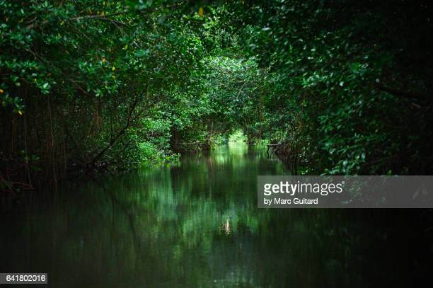 caroni swamp national park, trinidad, trinidad & tobago - paisajes de trinidad tobago fotografías e imágenes de stock