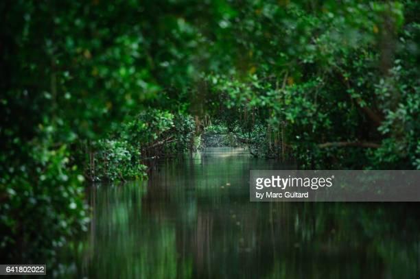 Caroni Swamp National Park, Trinidad, Trinidad & Tobago