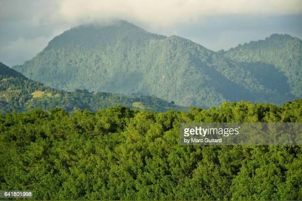caroni swamp, trinidad, trinidad & tobago - paisajes de trinidad tobago fotografías e imágenes de stock