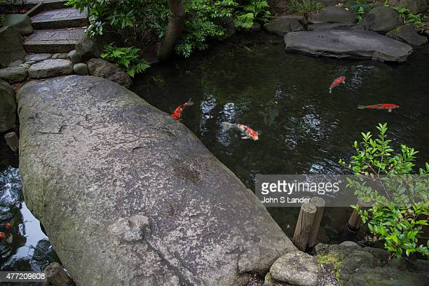 Carp are thought of in Japan as a symbol of fortune These ponds used as an element of a landscape pond garden Classic koi ponds have nishikigoi...