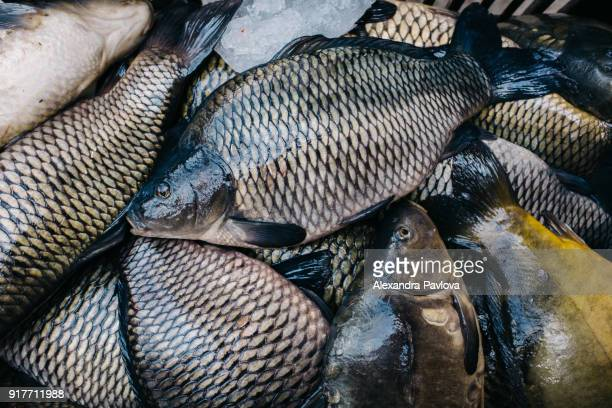 carp fish for sale at fish market - alexandra pavlova stock pictures, royalty-free photos & images
