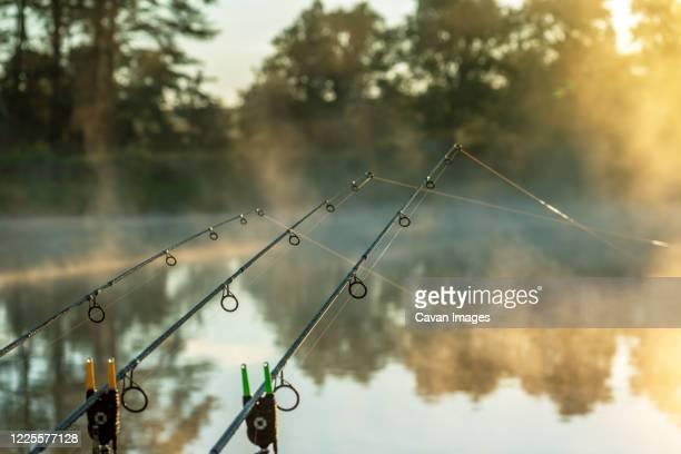 carp fishing rods misty lake. - 淡水釣り ストックフォトと画像