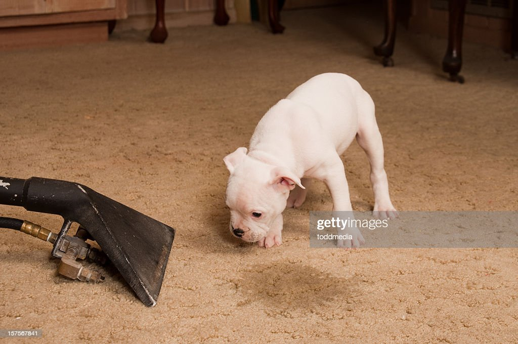 Carpet Cleaning Service : Stock Photo