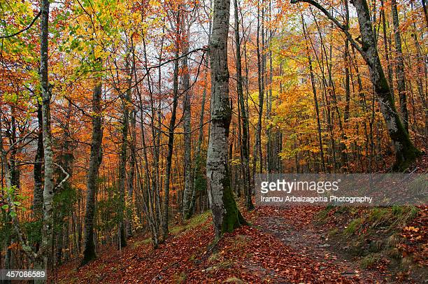 Carpet of autumn leaves in the forest