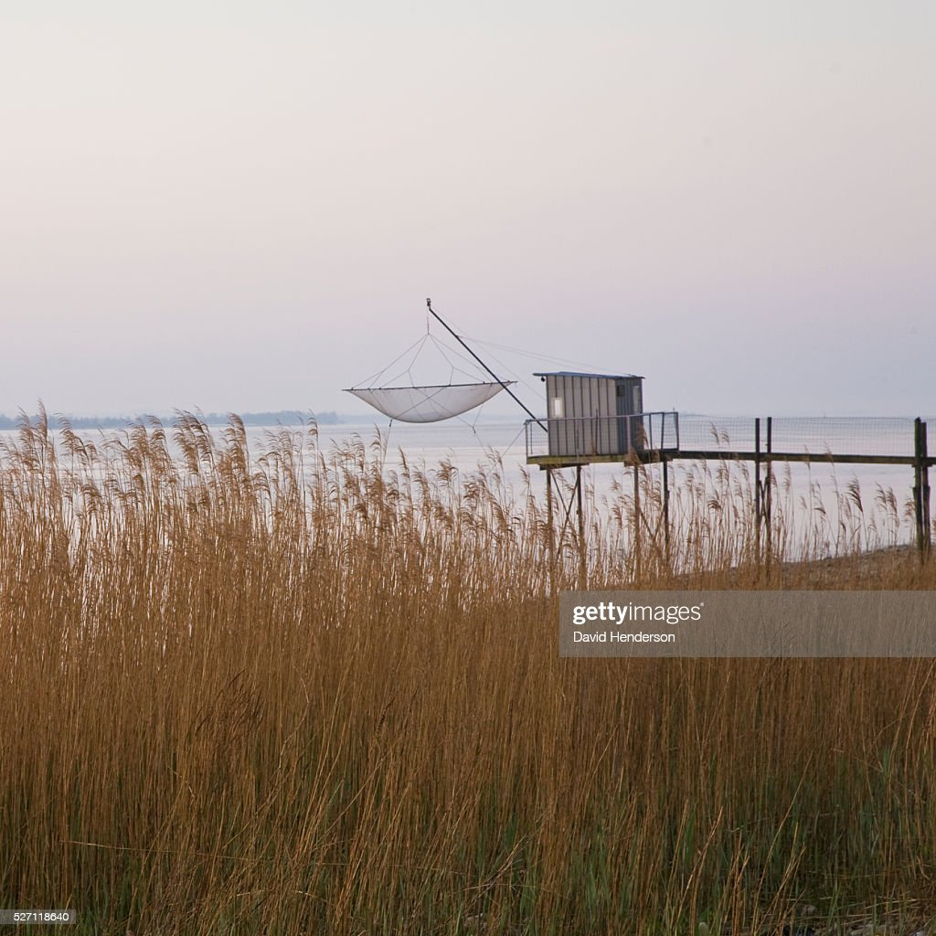 Carrelet (fishing platform) and tall reeds : Foto de stock