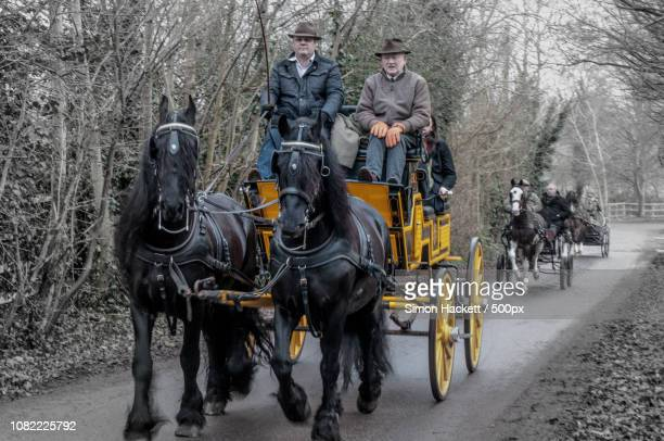 carriage driving - hackett stock photos and pictures