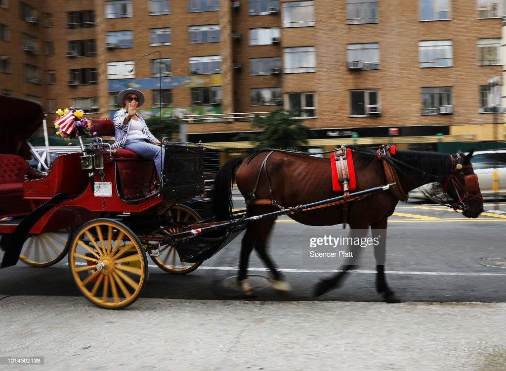 A carriage horse and driver return to the stable due to excessive heat on August 10, 2018 in New York City. According to New York City administrative code, all carriage horses used in tourism must immediately stop working and return to their stables when the temperature reaches 90 degrees. Animal rights activists, who want to permanently end the carriage horse business in the city, say many drivers ignore the law or linger in the park looking for customers long after an alert has been issued.