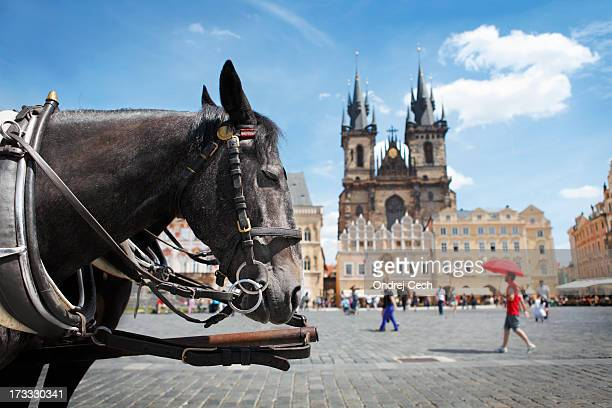 Carriage horse at Old Town Square in Prague