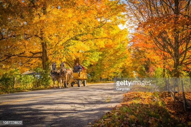 carriage in the beautiful autumn scenery - eastern townships stock pictures, royalty-free photos & images