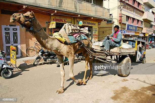 Carriage with camel