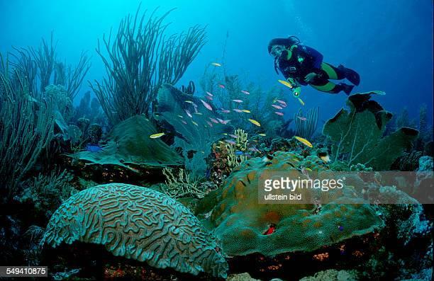 Carribbean reef and scuba diver Bonaire Caribbean Sea