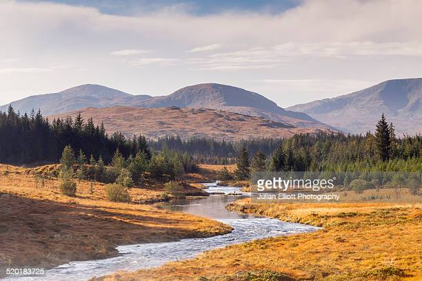 carrick lane in the galloway forest park - galloway scotland stock pictures, royalty-free photos & images