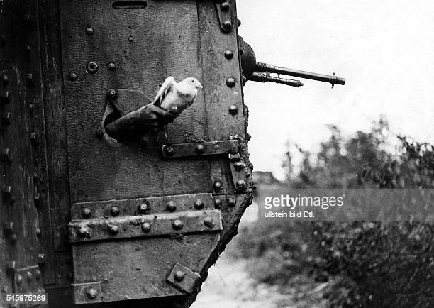 Carrier pigeon is setting out from a British tank- no further informationsummer 1918