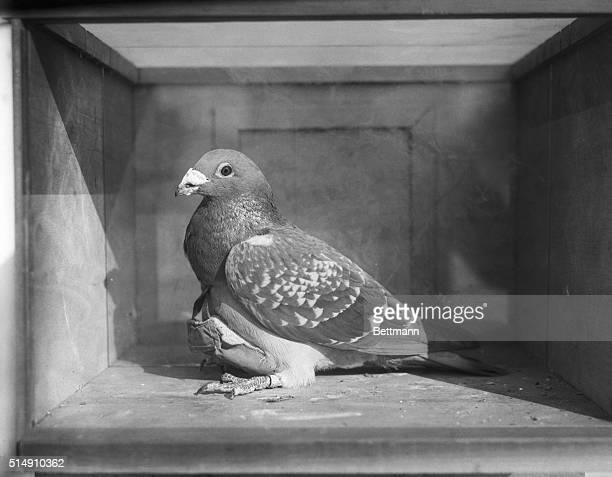 Carrier pigeons are used in an experiment conducted by novelist Ethel Hueston and Lieutenant Carter W Clark The birds carried paper money in a...