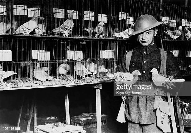 Carrier Pigeons Exhibition In London On December 4Th 1931