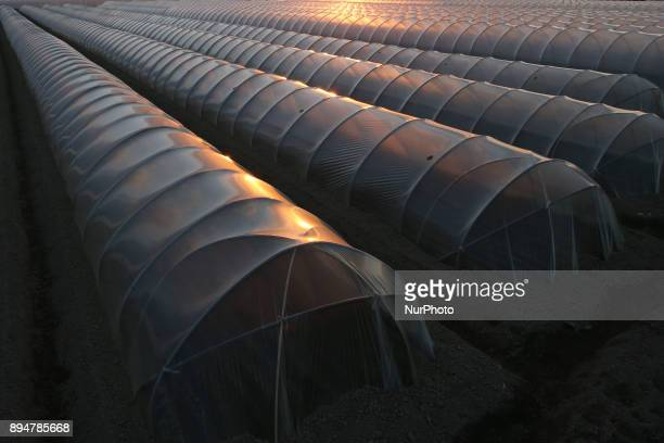 Carrots are stored in a plastic house 100 meters long December 18 2017 in Tokyo