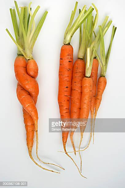 Carrots on white background, two twisted together